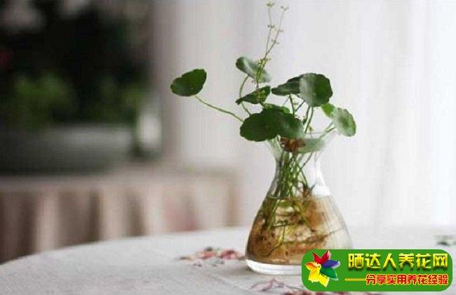 水培植物怎么过冬?水培植物冬季怎么养殖?