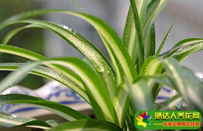 家中阳台客厅最好养的植物有哪些?适合新手种的花卉家庭盆栽推荐