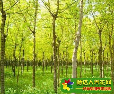 怎么防止苗木的根部发生腐烂?
