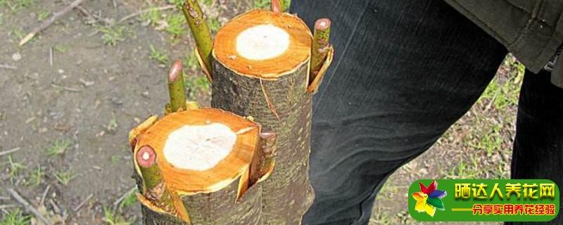 树接枝方法视频图片